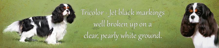 tricolorbanner.jpg